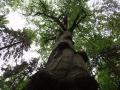 Přírodě blízké lesy