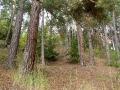 Lesní porosty
